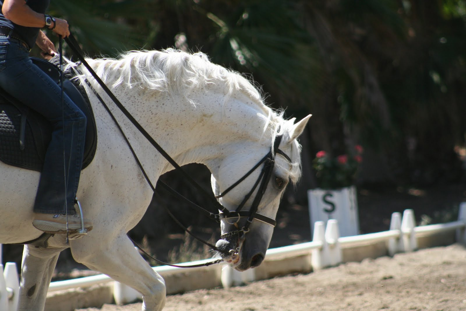 Keeping the back engaged in the working gaits