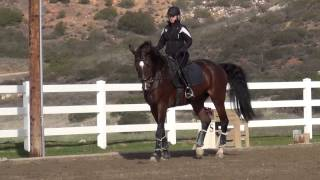 Correcting the Overflexion In the Horse's Neck