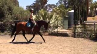 3 Year Old: First Work In Trot Under Saddle