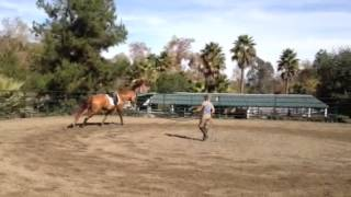 Starting Canter On The Lunge
