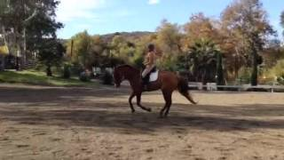 Stretch In The Canter