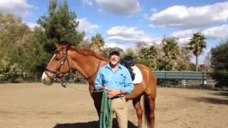 Will's Web Club: Sustainable Dressage
