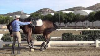 How to Develop Piaffe, Stretching in Piaffe