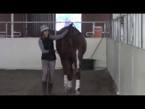 Art2Ride Associate Trainer Program: Allison and Contigo Full Training Session Part 1: Work In Hand