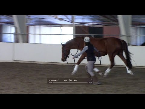 Art2Ride Associate Trainer Program: Allison and Contigo Full Training Session Part 2 Lunging