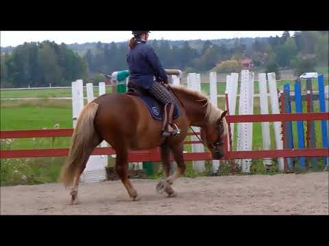 Art2Ride Associate Trainer Program: Tytti and Poly: Riding Self Critique