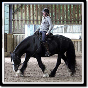3b91530804b I have been around horses since 11 years old where i started at a riding  school which is where i stayed for many years. I also rode at a horse  dealer's yard ...